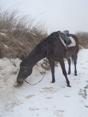 konie, jazda konna, jazda konna zimą, jazda konna w terenie