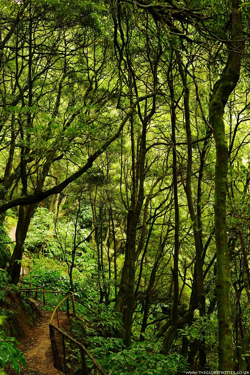 Parque Natural da Ribeira dos Caldeirões in Nordeste