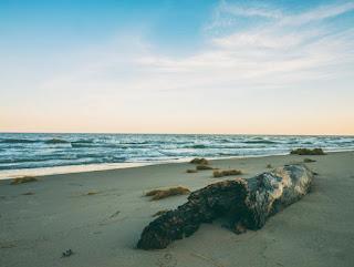 Morceaux de bois sur la plage