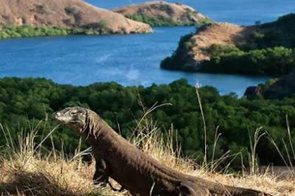 Berlibur Di Labuan Bajo? Jangan Lupa Mengeksplor Keindahan 5 Pulau Cantik Ini