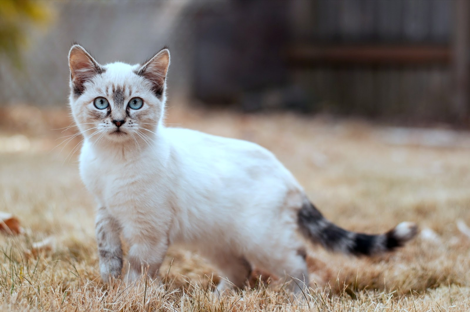 Gambar Kucing Ambeien godean.web.id