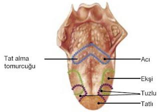 Dilin Yapısı ve Görevleri (7. Sınıf)