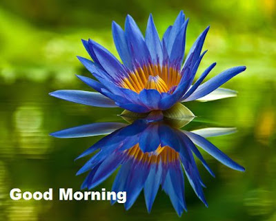 Good morning images with blue lotus flowers hd