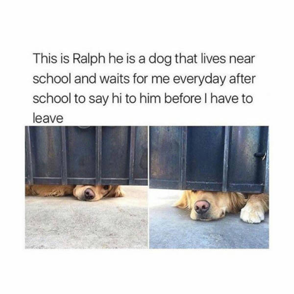 This is Ralph he is a dog that lives near school and waits for me everyday after school to say hi to him before I have to leave