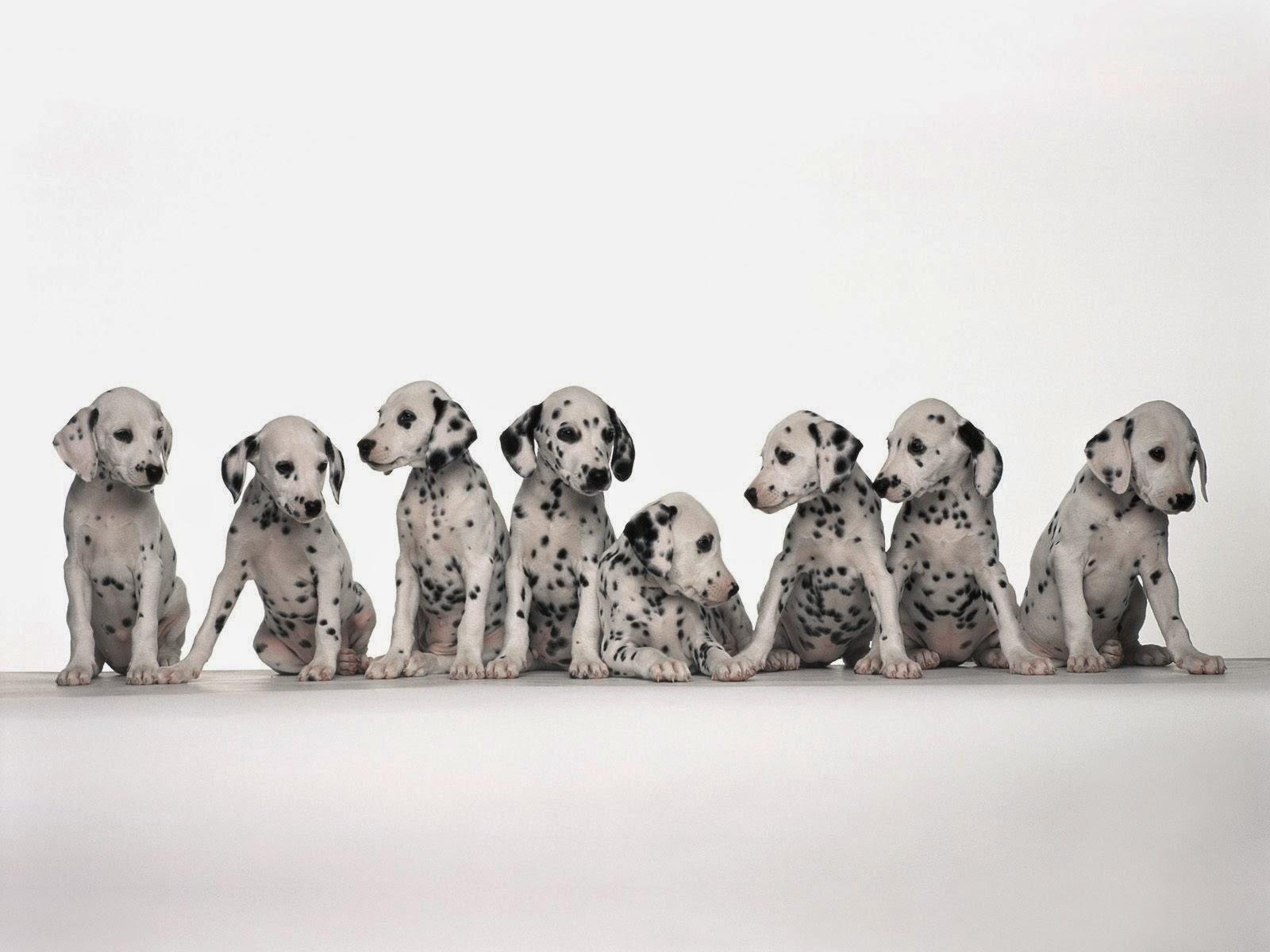 المجموعه الثانيه من صور الحيوانات بجوده عاليه  Animal Wallpapers