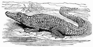 'Logan River has been alleged, but no credence has been given to these reports, as no authentic record exists of the occurrence of the alligator in Queensland rivers south of the Mary.'