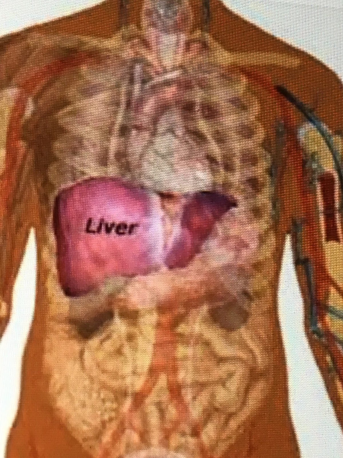 can lunesta damage the liver