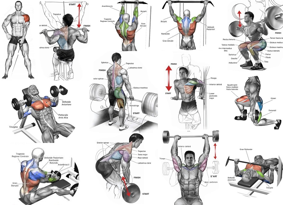 The Most Effective Muscle Building Exercises - all ...