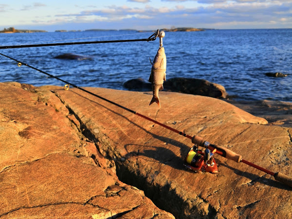 Voiko Helsingin rannoilta kalastettuja kaloja syödä?
