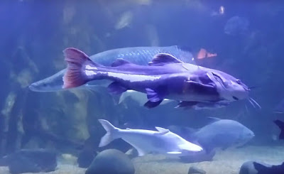 Gambar Seaworld Ancol