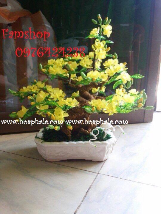 Goc bonsai cay hoa mai o Phuc Dong