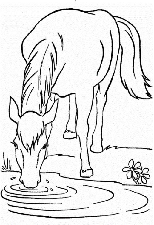 Tranh tô màu con ngựa đang uống nước