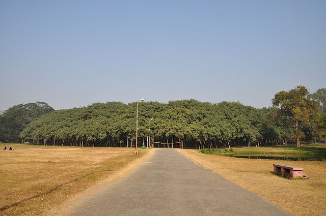 The Largest Banyan Tree In The World, Adyar, Chennai & Great Banyan Tree Howrah, Kolkata, India