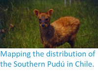 http://sciencythoughts.blogspot.co.uk/2016/01/mapping-distribution-of-southern-pudu.html
