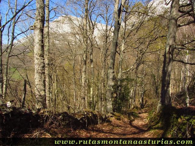 Bosque entre Salceo y Bermiego