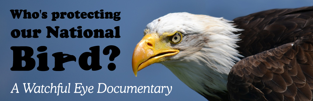 Bald Eagle Film (Who's Protecting Our National Bird?)