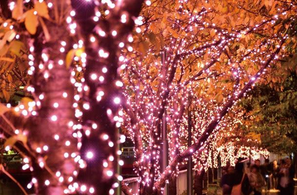 【日遊】目黑川櫻花燈飾 粉紅的浪漫海洋
