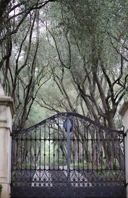 Gate,Tree-lined Driveway image by LeAnn for linen & lavender (l&l)