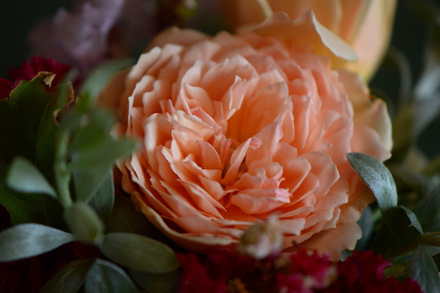 Monday vase meme, rose Crown Princess Margareta, Convolnulus cneorum, small sunny garden, desert garden, amy myers photography