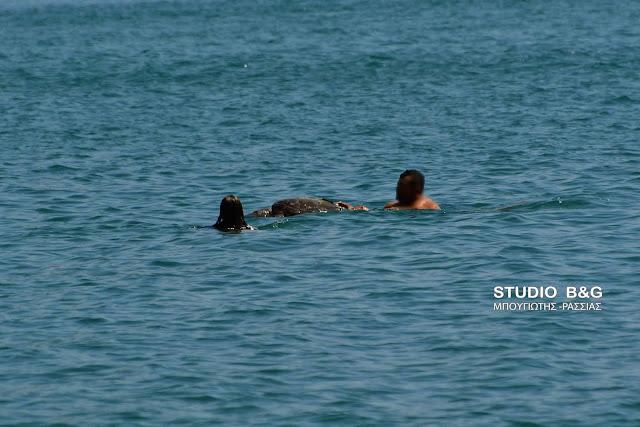 Τραγικό: Νεκρή θαλάσσια χελώνα ανάμεσα σε λουόμενους σε παραλία του Ναυπλίου