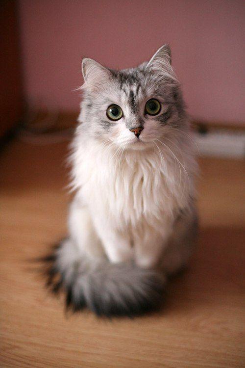 Cute Cat Photos for Whatsapp