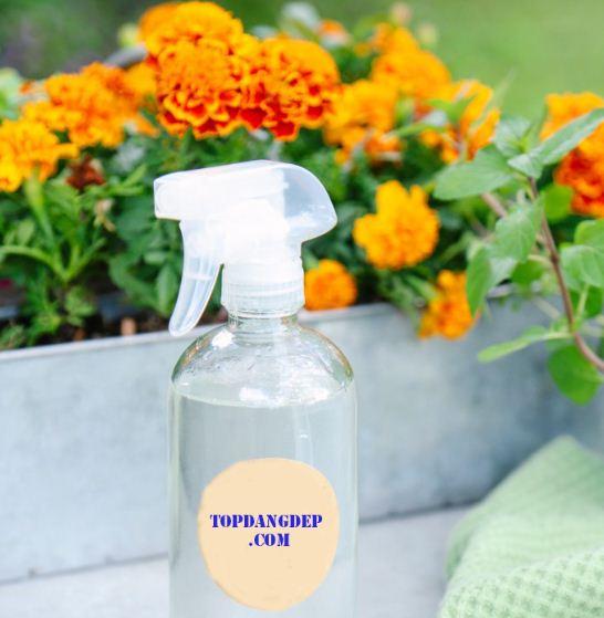 DIY: Cách làm nước diệt nấm mốc hot nhất trong mùa mưa này