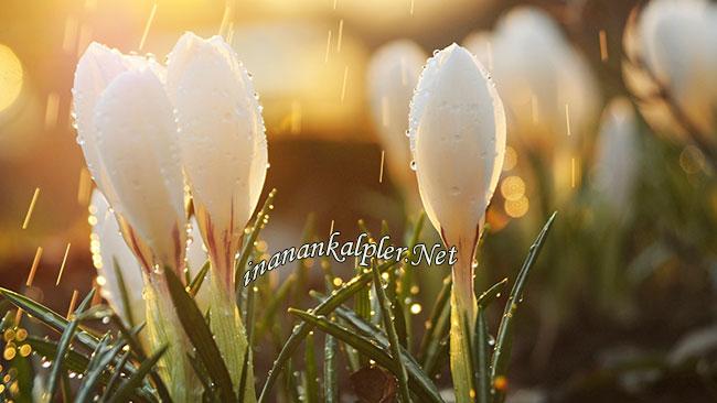 Ümitlerin Yeşerdiği Gün - www.inanankalpler.net