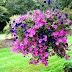 7 Jenis Bunga Hias Gantung yang Terbaik