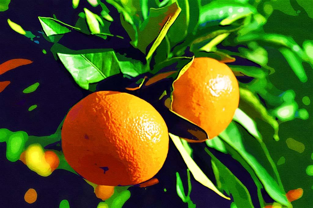 Pin Sliced-orange-fruits-wallpaper-and-photo-high ...