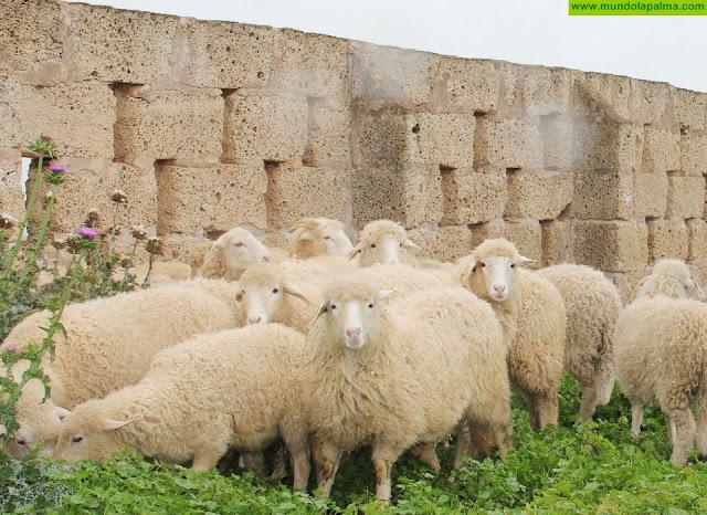 La Consejería abre el plazo para las ayudas comunitarias al almacenamiento privado de queso y carne
