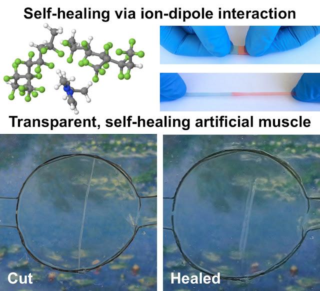 self-healing artificial muscle