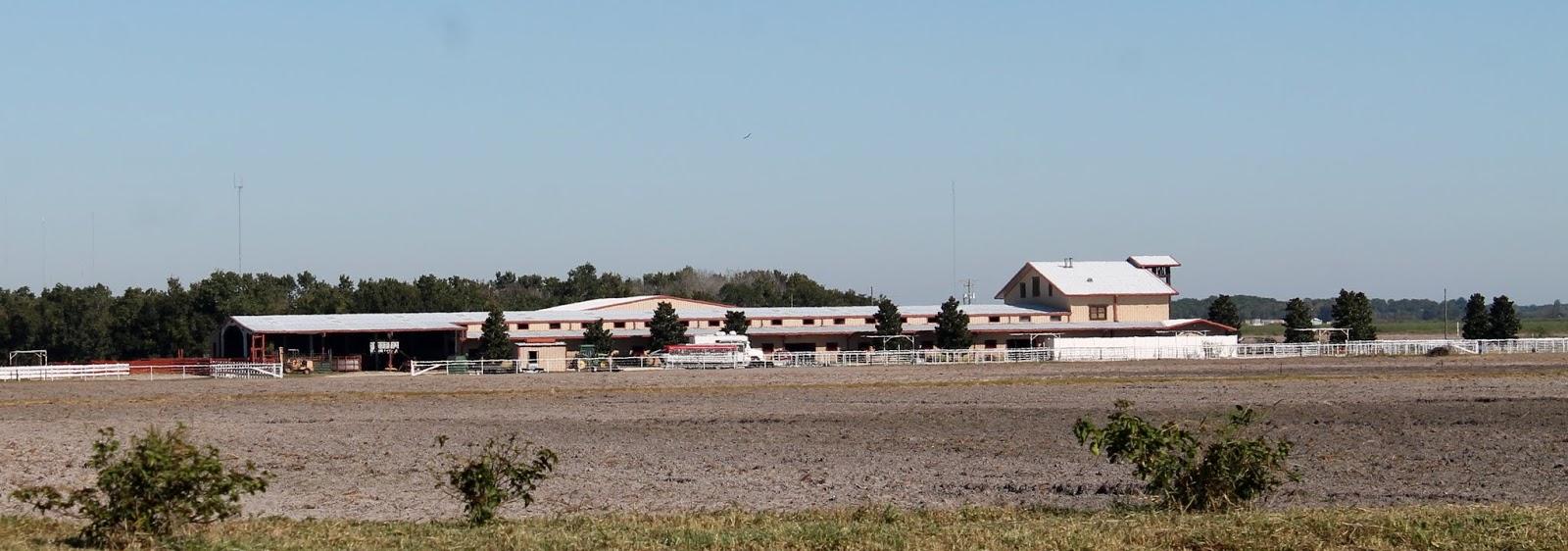 Vaquerías, plantaciones y mercados agrícolas en las áreas rurales de Hillsborough County