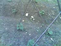 http://alampanorama.blogspot.co.id/2012/04/cara-menanam-sayuran-organik.html