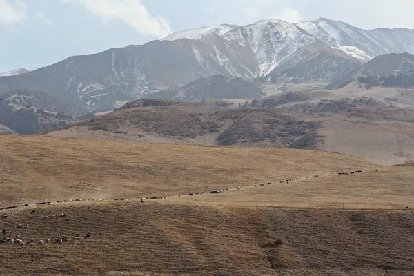 Kirghizistan, Ala-Too, Kashkha-Suu, © L. Gigout, 2012