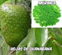 como hacer un te de hojas de guanabana con moringa