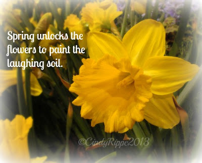 First Day of Spring, Daffodils, Spring quote about flowers, Daffodils, Yellow flowers, Florals-Family-Faith, Cindy Rippe