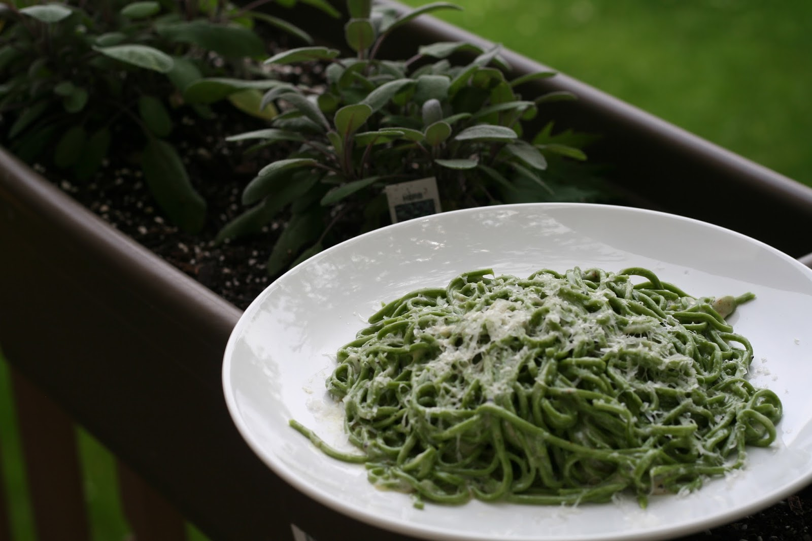 You have to cook it right: Cacio E Pepe with Stinging ...