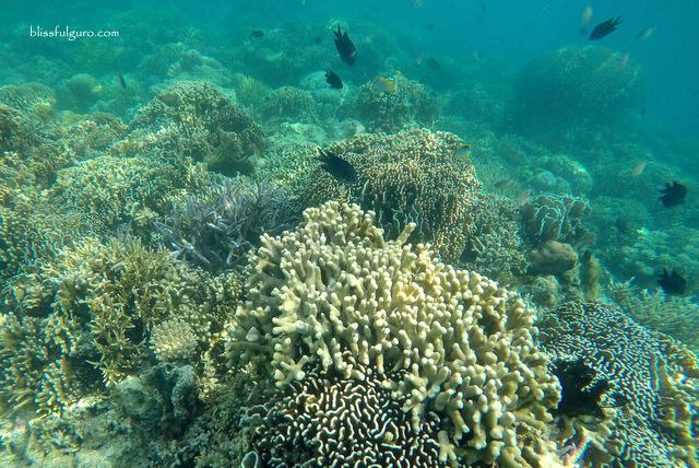 Komodo National Park Indonesia Diving