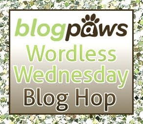 Wordless Wednesday With BlogPaws