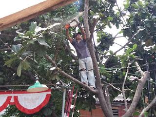 Jasa tebang pohon Surabaya