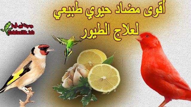 مضاد حيوي طبيعي للطيور تحضره بالليمون والثوم