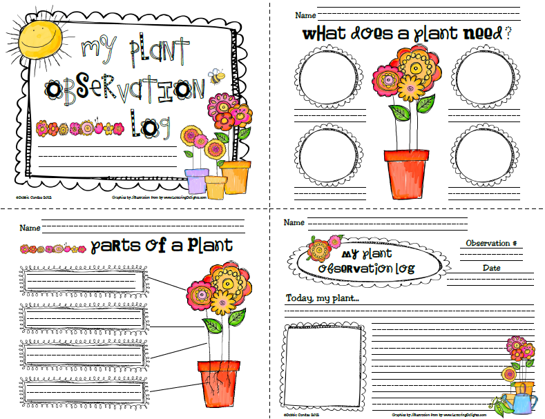 Sailing Through 1st Grade Plant Observation Log For The