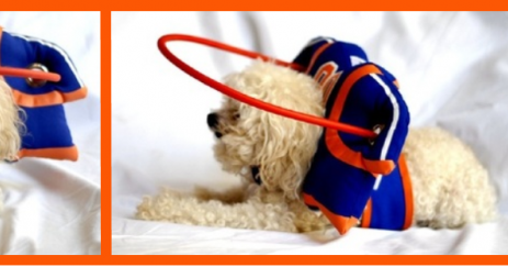 Bonnie S Blog Aids For Blind Dogs