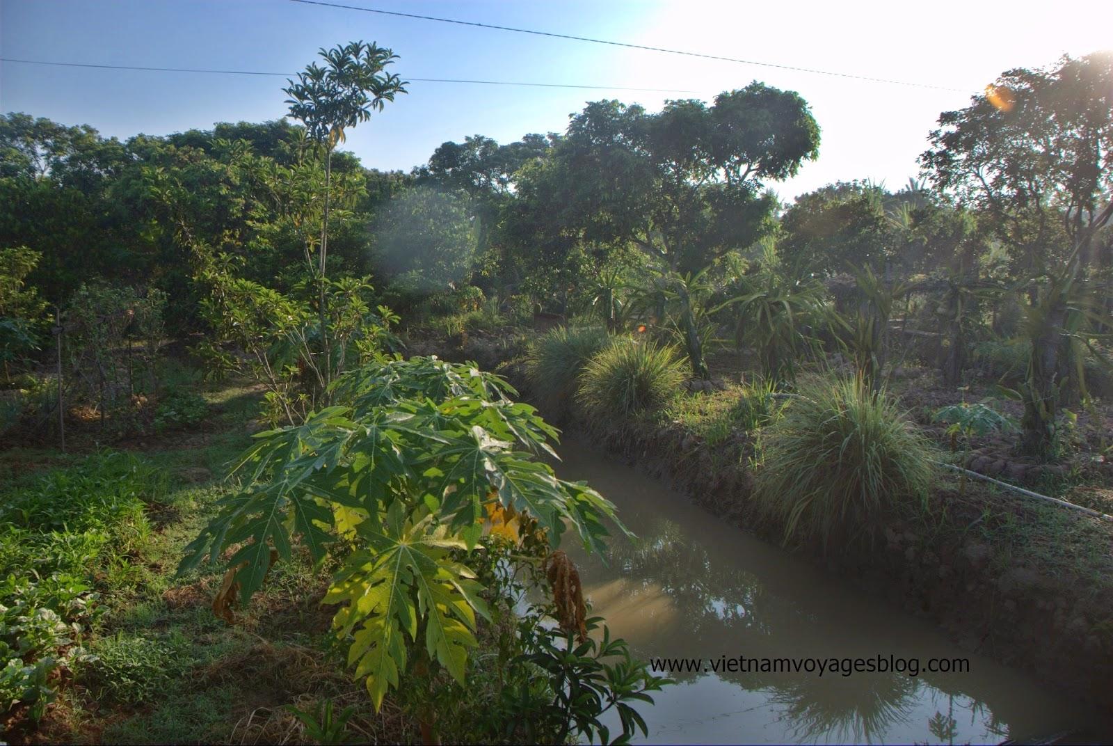 Vườn rộng và yên tĩnh, thoáng mát