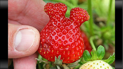 strawberry seperti kepala mickey mouse