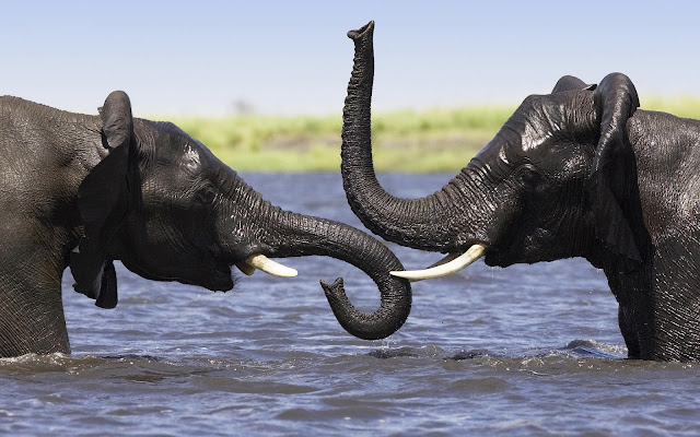 Foto van twee olifanten in het water