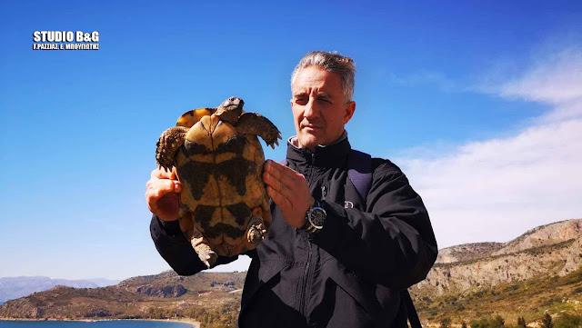 Ναύπλιο: Αγουροξυπνημένη χελώνα βγήκε τσάρκα στον ανοιξιάτικο ήλιο