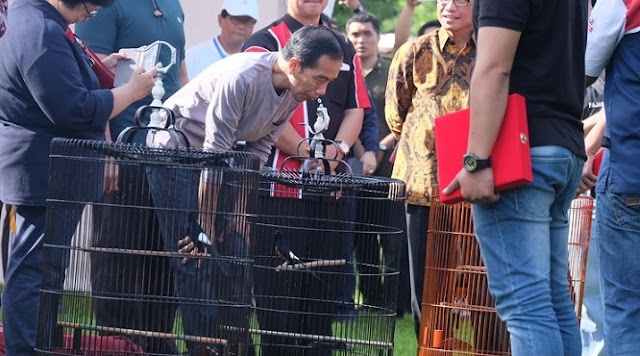 Burungnya Kalah di Perlombaan, Jokowi: Berarti Jurinya Jujur