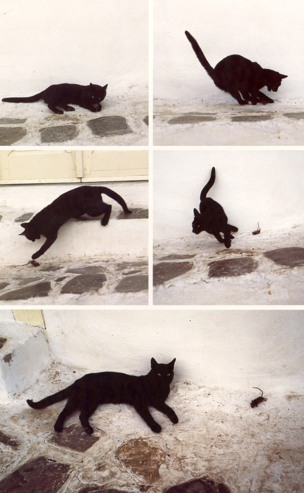 cat hunting mouse