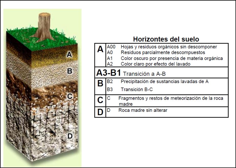 Influencia de los suelos en los bosques tropicales for Cuales son las caracteristicas del suelo